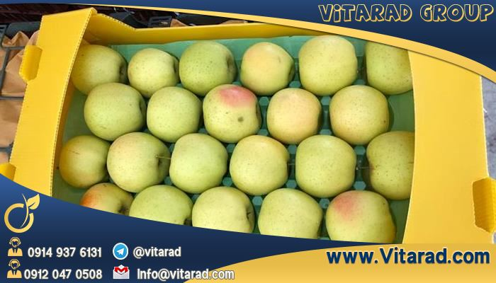 Wholesale of Iranian fresh apple