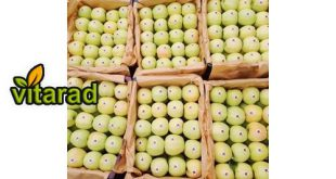Apple fruit order online
