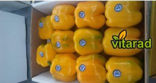Buy Iranian sweet pepper