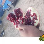 Factory supply natural pomegranate