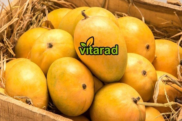 Oriented natural pure mangoes