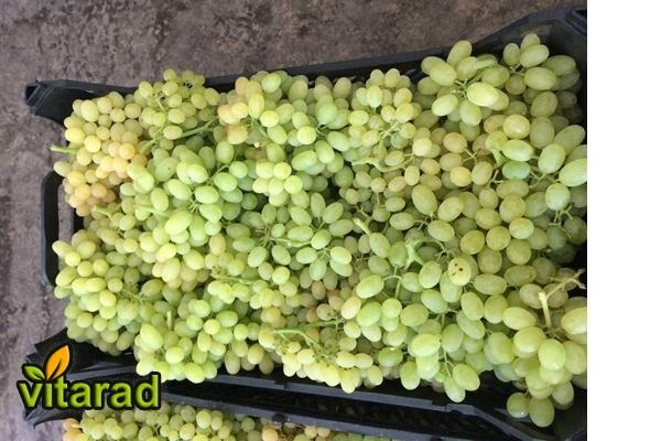 Purchase price of grape