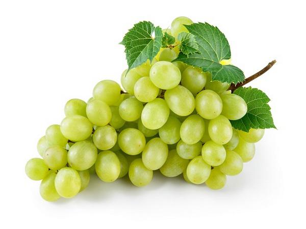 wholesale best grape in market