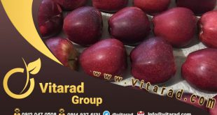 Buy red apple from Iran