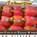Export red sweet pepper from Iran