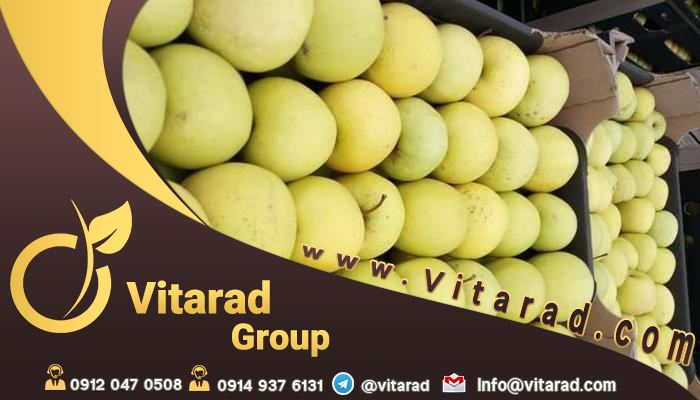 Export yellow apple to Russia
