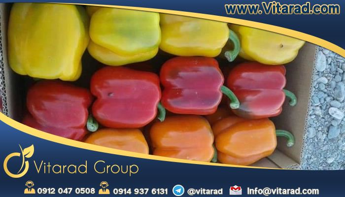 Production of bell peppers in Isfahan