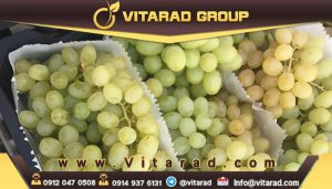 Buy grapes in bulk