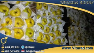 Export yellow apples to Russia