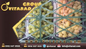 Fresh grape exporter and supplier
