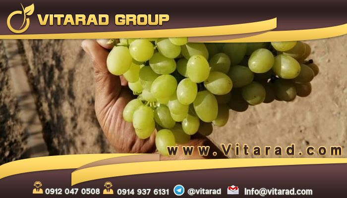 Grapes in the world