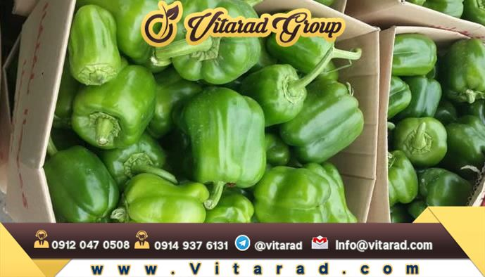Bell pepper production in Iran