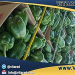 Iranian bell pepper in international market