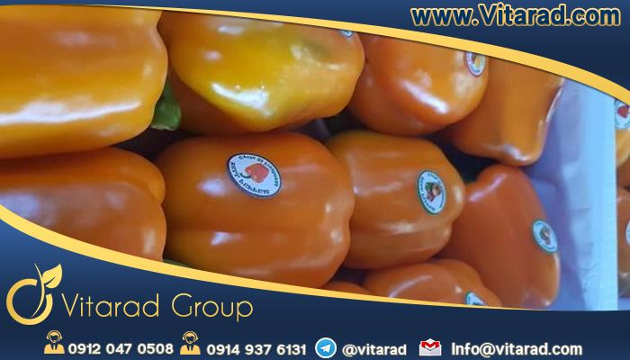 Wholesale prices of Iranian bell peppers in international market