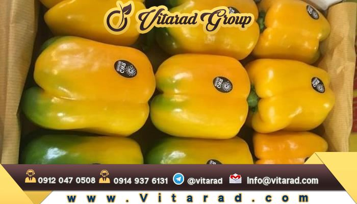 Distributor of organic bell pepper in Isfahan