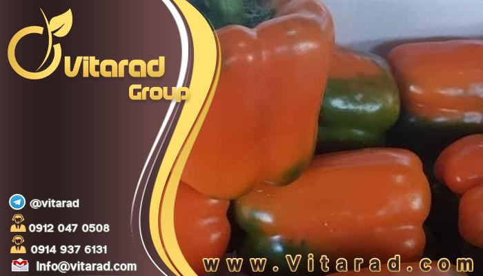 The main order of the best bell peppers in Isfahan