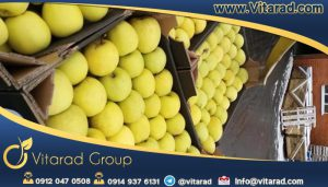 Yellow apple fruit exporter