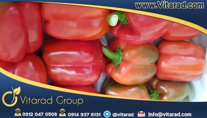 The price of Iranian red bell pepper