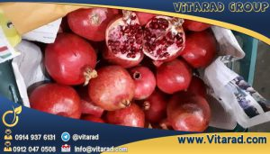 Persian Sweet Pomegranate for sale